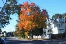 Autumn color