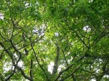 tree resized