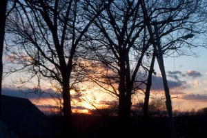 closeup of trees at sunset