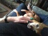 beany cuddle