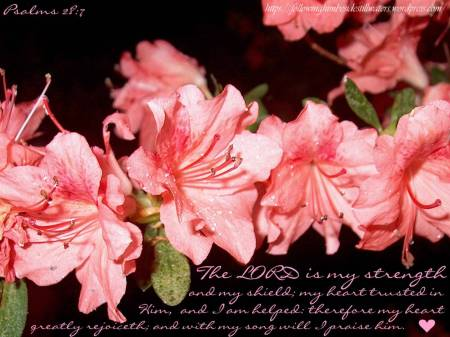 pink-flowers-psalms-28-copyright
